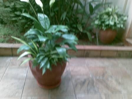 office plants in kenya
